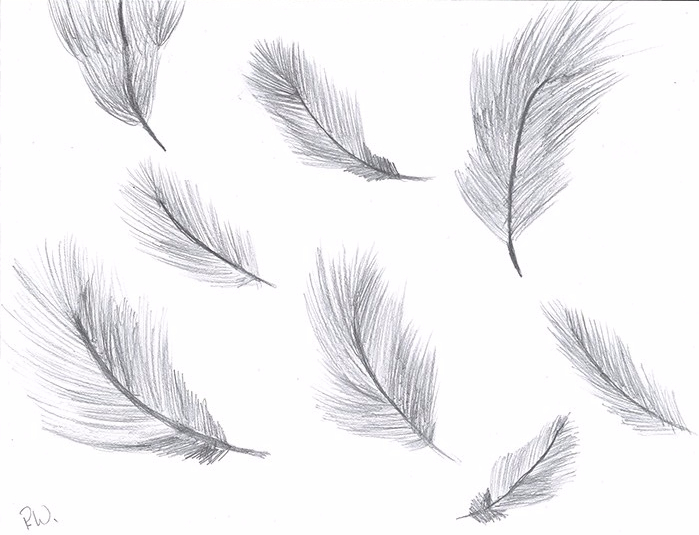 Wagner Feathers